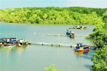 CAN GIO MANGROVE FOREST TOUR BY CAR