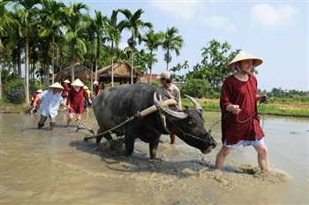 HOI AN BUFFALO RIDE & BASKET BOAT TOUR